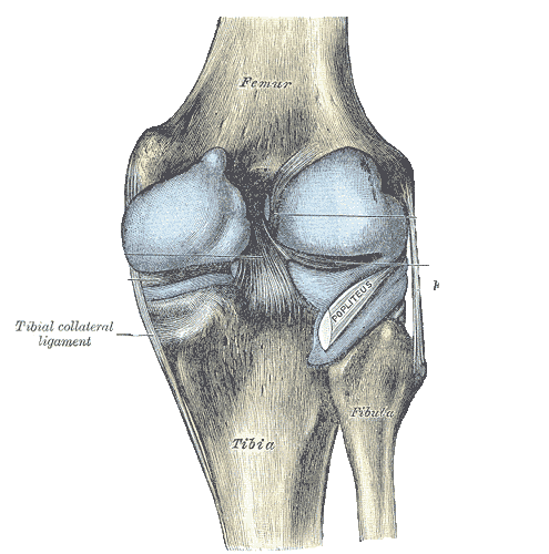 Ligamento Colateral Tibiar