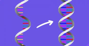 Transcriptase Reversa