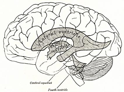 Ventriculos cerebrais